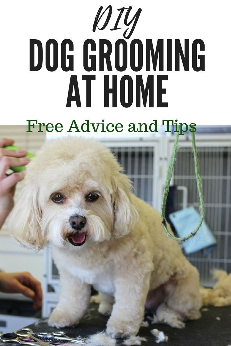 Free Tips And Advice For Grooming Your Dog At Home Puppy Grooming