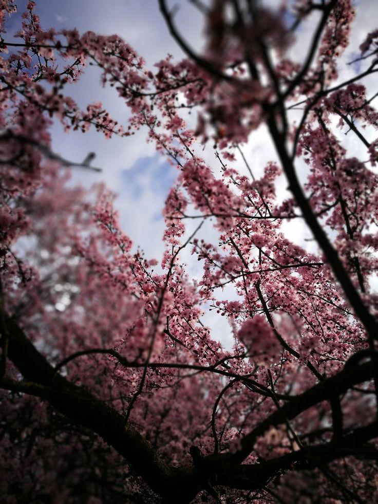 Spring time foto di Morgan Capasso