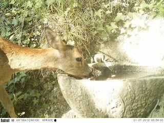 Wild Wood en Provence: roe deer and birds