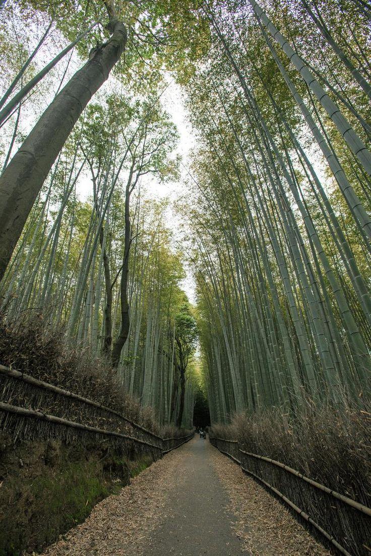 Die besten 25 Bambus im kübel Ideen auf Pinterest