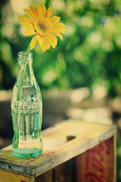Daisy & Coke... what a sweet simple idea to use as center pieces for a wedding