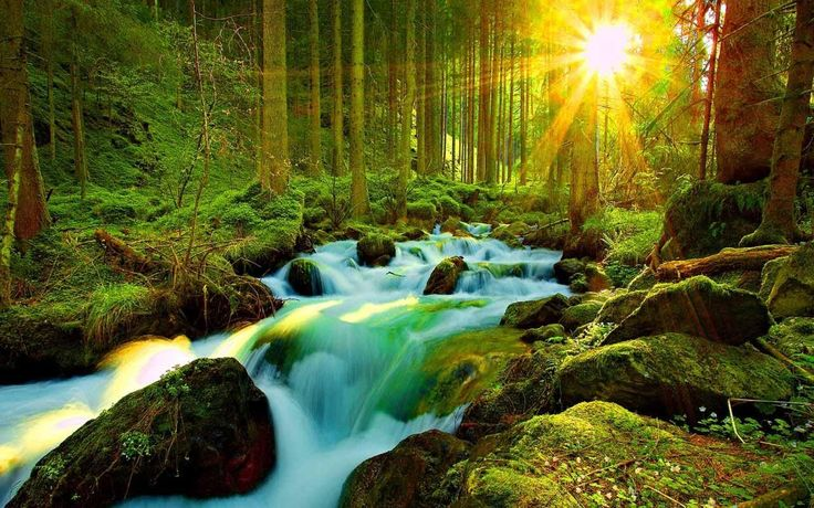 Image for 3d nature wallpapers for mobile phones