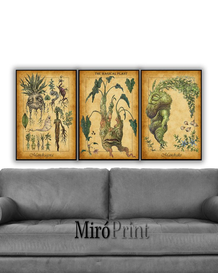 Harry Potter Set of 3 Prints, Mandrake,  Mandragora Print, Mandrake Plant, Herbology Art, Mandrake Print, Mandrake Art, Harry Potter Posters by MiroPrint2 on Etsy https://www.etsy.com/listing/546815798/harry-potter-set-of-3-prints-mandrake