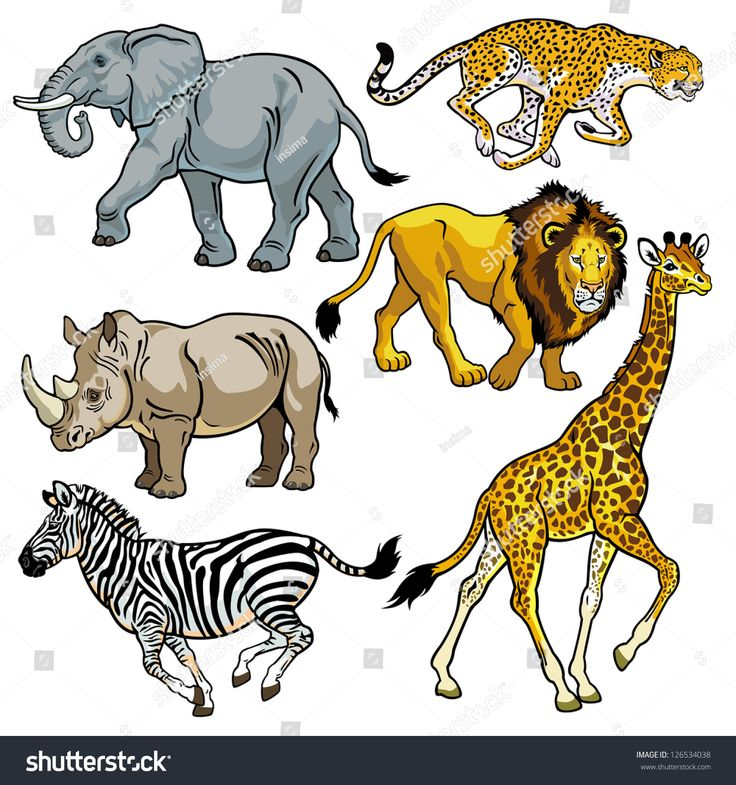 set with africa animals,beasts of savanna,pictures