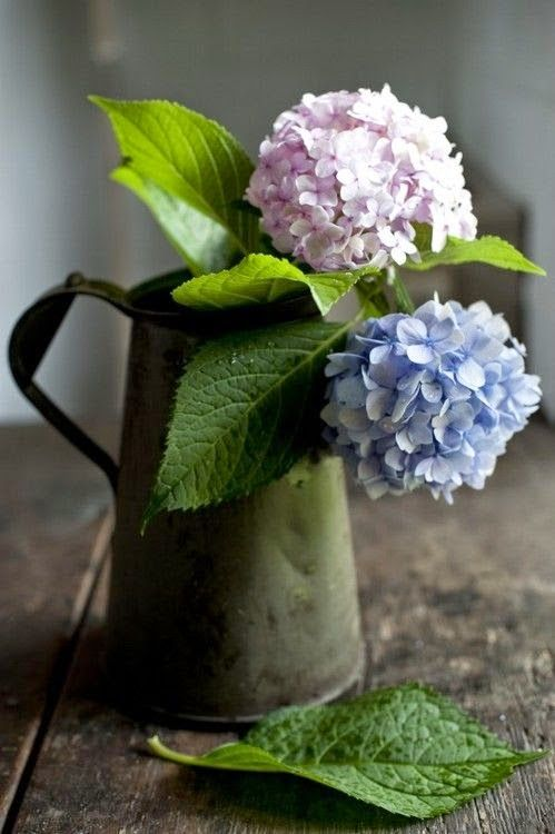 Pale pink hydrangea and pale blue hydrangea in a vintage pot on a rustic wooden table. Very romantic and beautiful. #flowers #rustic