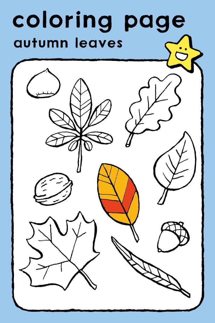 Autumn Leaves Kiddicolour Coloring Pages Autumn Leaves Coloring Pictures