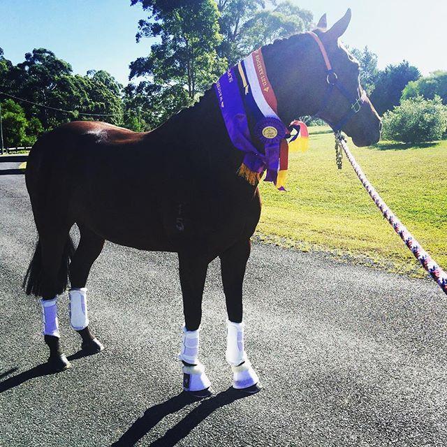 White boots!! We have Dressage next weekend @ MVDHC Regional Champs...hopefully it doesn't rain! ☀️ #equestrian #horses #dressur #horsesofinstagram #pony #love #showjumping #pferd #instahorse #equine #dressagehorse #riding #horseriding #eventing #jumping #hufglockenau #beautiful #mare #ponies #dressyr #pferde #crosscountry #cheval #dressurpferd #training #gelding #reiten #dressagerider #hufglocken