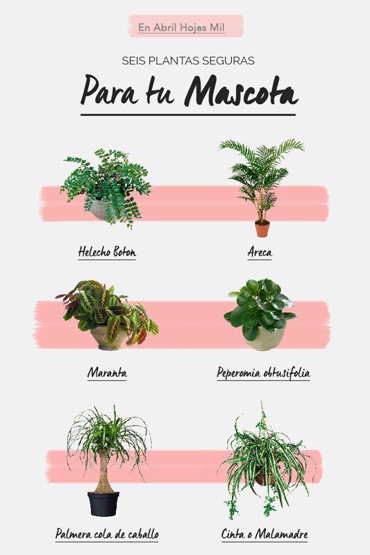 6 Plantas de interior seguras para tu mascota