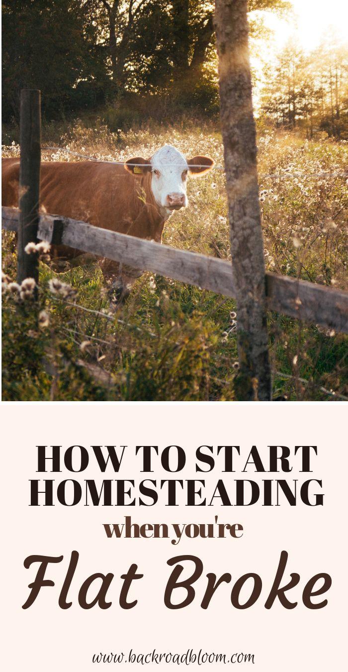 Homesteading When You're Broke - Homesteading for Beginners