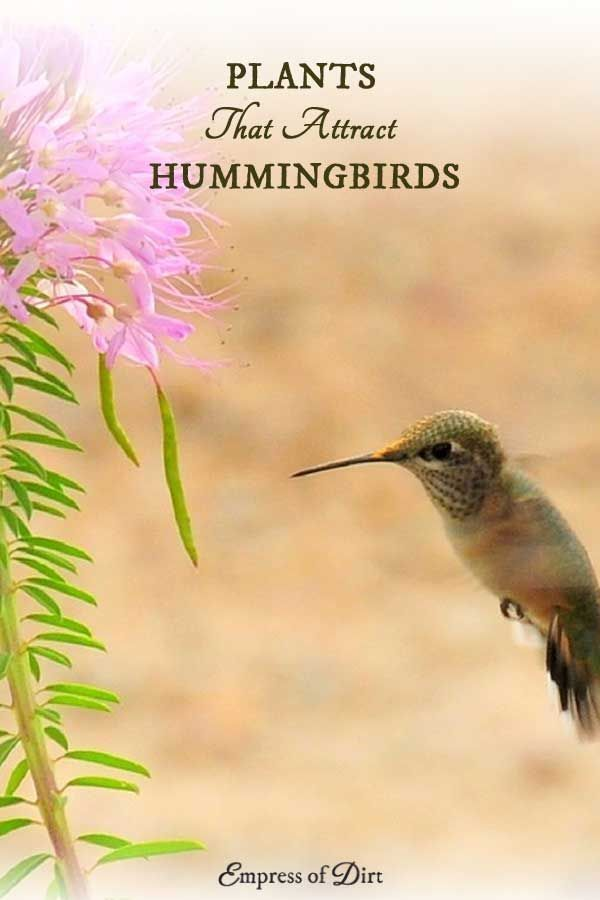 Love hummingbirds? There are many different flowering plants you can add to your garden or balcony to attract and nourish these beautiful birds. Have a look at the suggestions and see what would work in your yard. Hummingbirds, like bees and butterflies, are essential pollinators for the garden. Sponsored