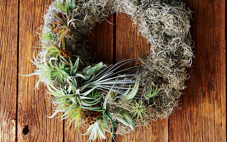 Unlike everyone else's holiday wreath, yours will have plants that are still alive