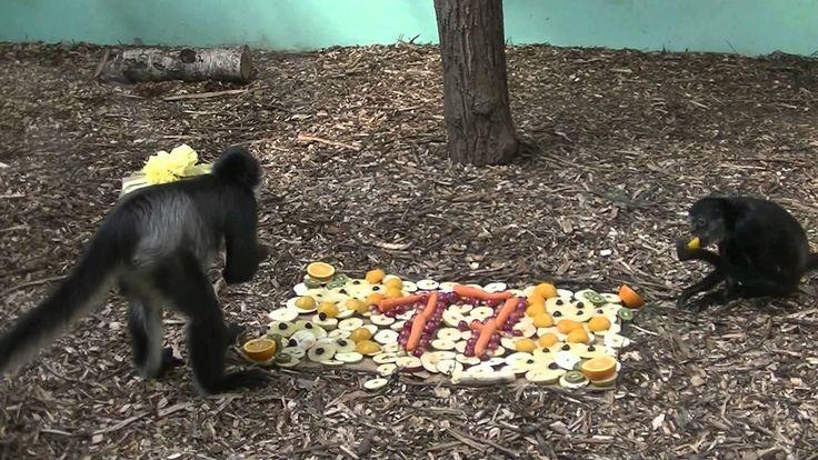 17 urodziny Colombo