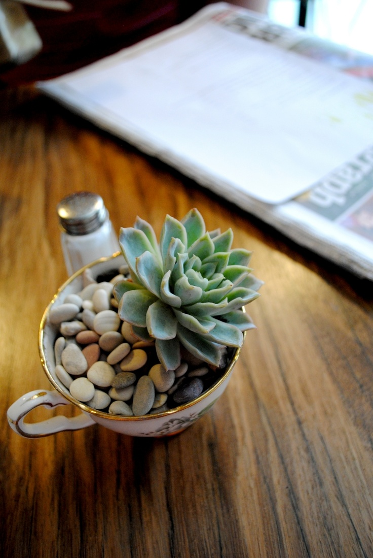 Succulent at Double Roasters, Marrickville.