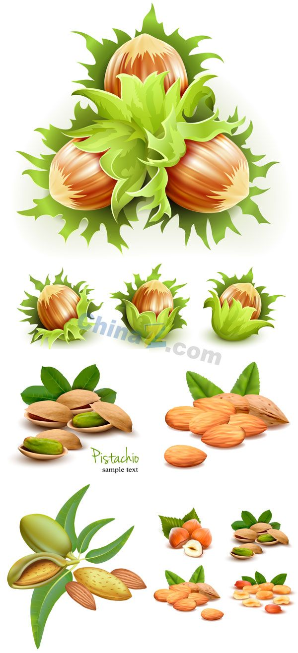 Green nuts vector material download