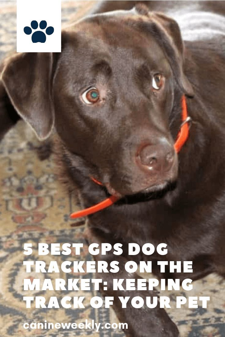 5 Best Gps Dog Trackers 2020 Reviews And Buying Guide Dogs