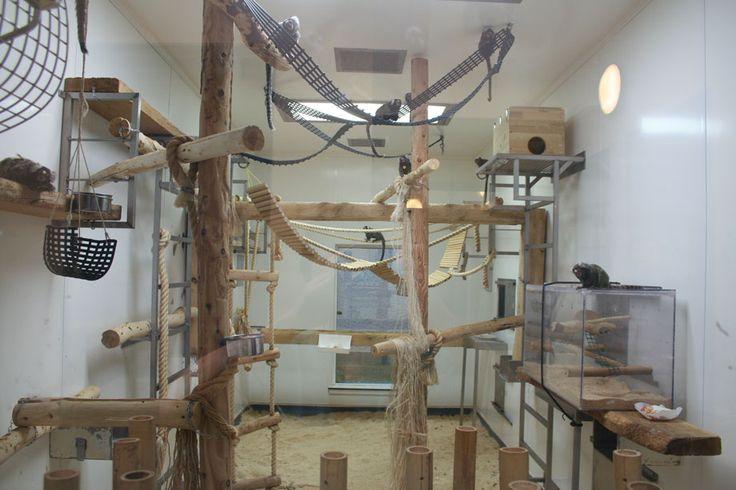 Marmoset Cage Bing Images Animal Habitats Pet Monkey