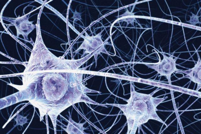 NEUROPLASTICITATEA CREIERULUI: ZECE metode prin care poti sa-ti ajuti creierul sa creeze noi retele neuronale