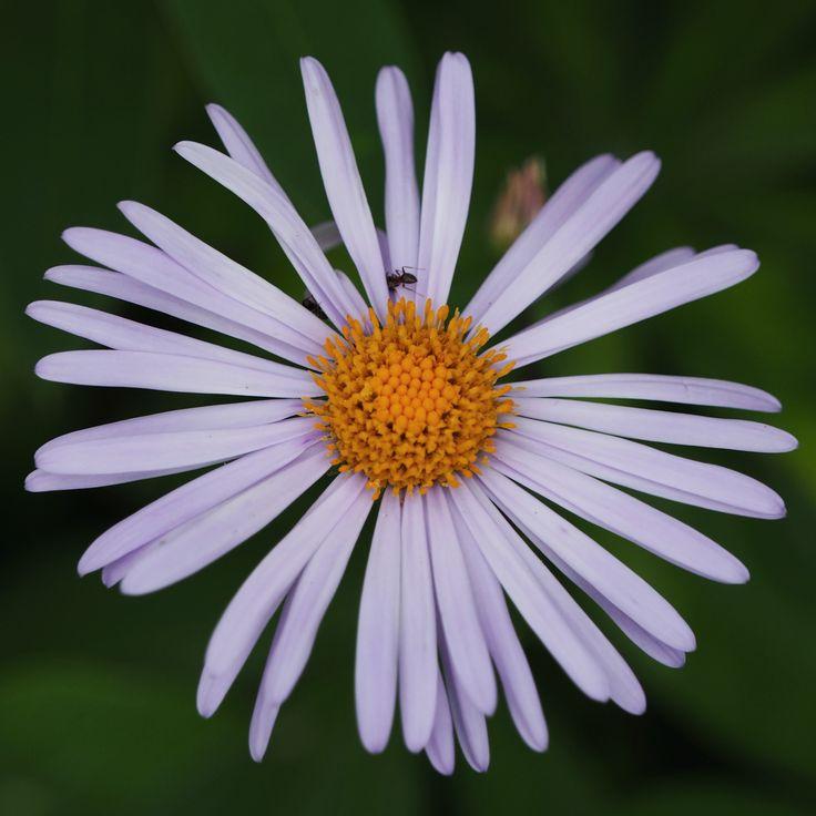 Friendly daisy by Alexander Polomodov on 500px