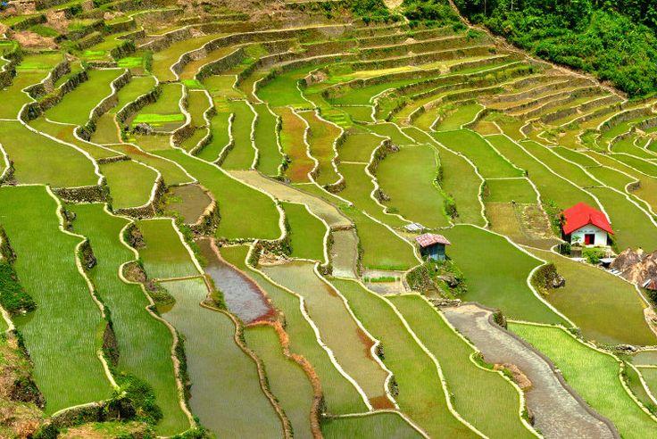 Depuis 2 000 ans, les habitants de la région nord de Luçon aux Philippines se transmettent de génération en génération l'art de cultiver le riz à flanc de colline. Les rizières en terrasse de Banaue, étendues sur plus de 10 000 km2, offrent en effet l'un des plus spectaculaires paysages façonnés par l'homme, à voir à environ 10 heures de route de Manille.