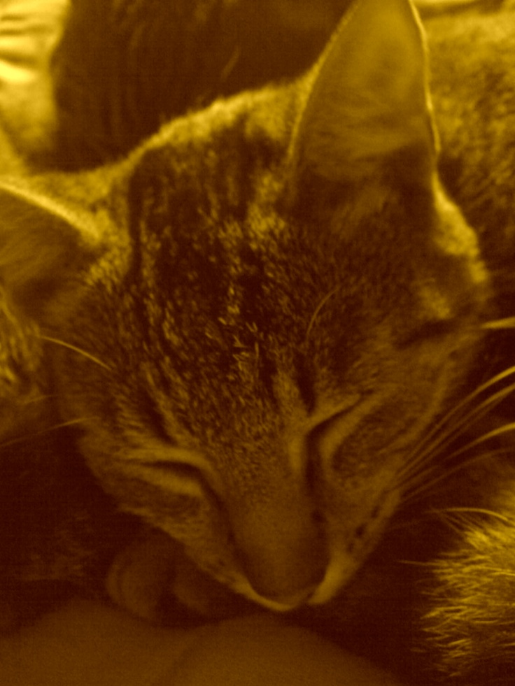 Mitsie