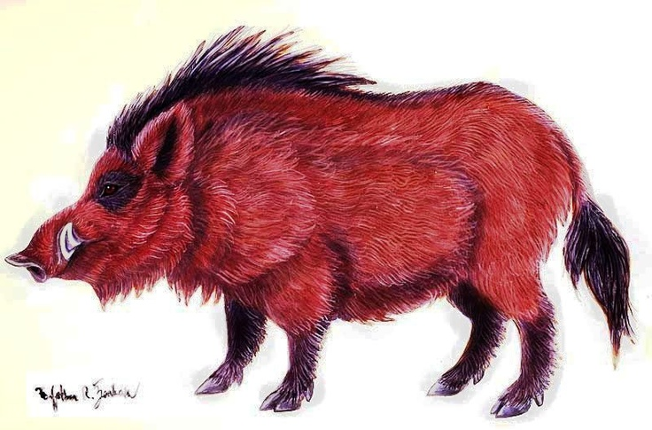 Red Boar: Foxes Boar, Pigs Sooie, Red Boar, Woo Pigs
