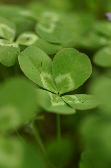 Lucky four leaf clovers. I have a necklace of real four leaf clovers that I made when I was younger. I still find them sometimes.