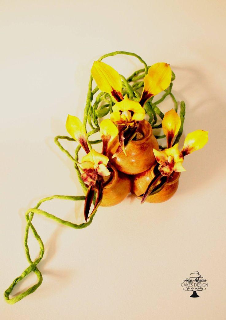sugar donkey orchid