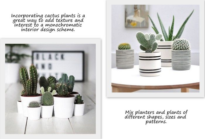 A small group of cactus plants displayed in plain white, or black and white pots create a sleek, crisp, modern look and is perfect for a Scandinavian style interior.
