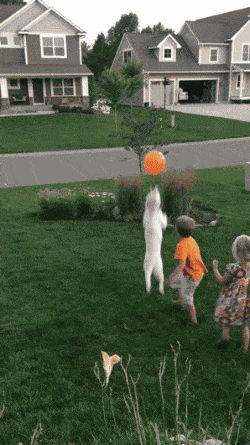 21 Best GIFs Of All Time Of The Week #205