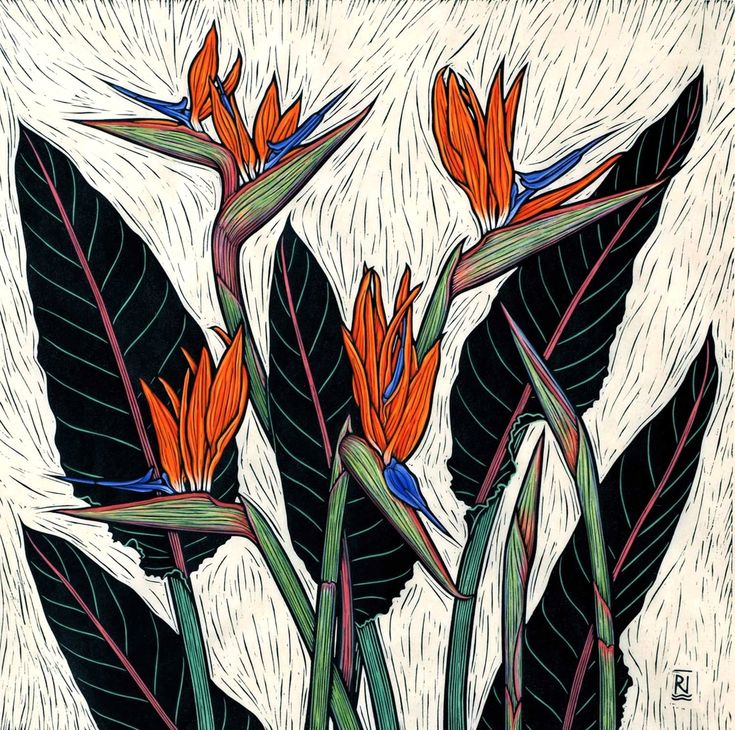 Linocuts by artist Rachel Newling of exotic flowers: Tropical Ginger, Frangipani, Hibiscus, Strelitzia, Torch ginger, Heliconia, Oriental Lily, Iris, Coral tree, cactus flower & Tulip. Linocuts are for sale as limited edition prints