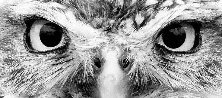 animal eye black and white - photo #8