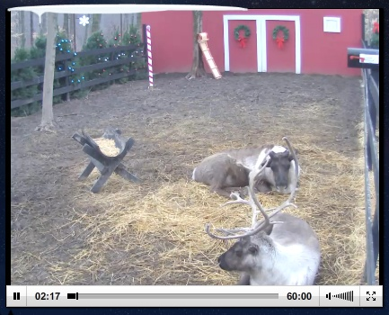 Live Reindeer Cam! Watch Santa feed them twice daily! Added to Amazing Animal Web Cams  http://www.livebinders.com/play/play_or_edit?id=66972