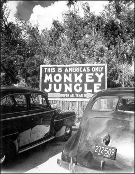 In 1935, Joe and Grace DuMond founded Monkey Jungle near Miami, Florida. Monkey Jungle became one of the first tourist attractions to allow its animals to roam freely around the property.
