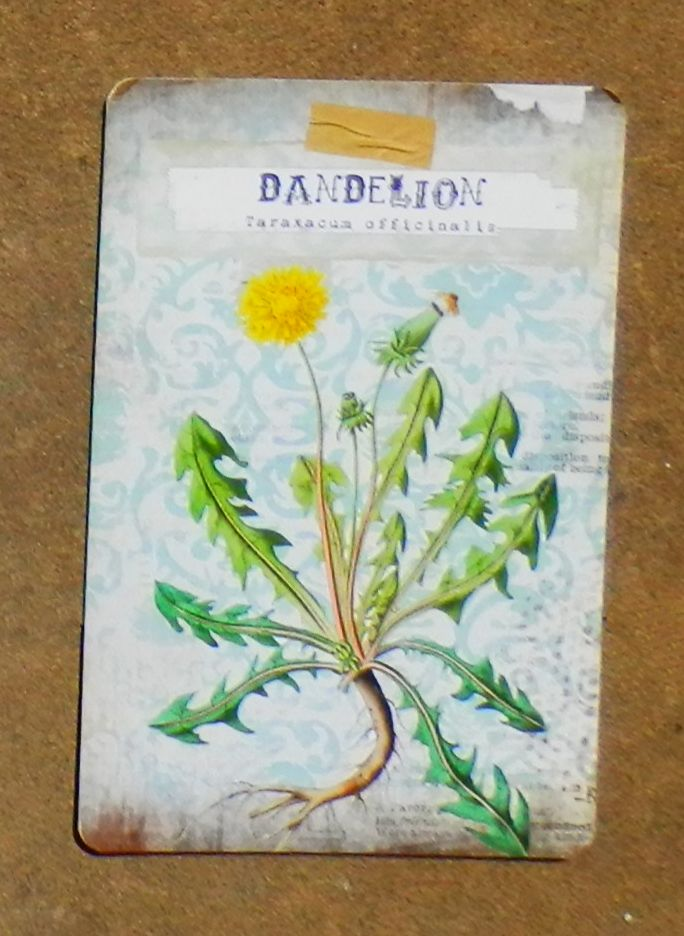 Dandelion represents happiness, desire and sympathy. It may be used as a cure for fairy illnesses such as the dart or blast. Dandelion is also useful in enchantments to attract fairies, or as an ointment or salve to grant fae-sight. It is an herb of Midsummer. It is sometimes called Fairy Clock & can be used in spells and rites of all kinds to either attract or repel fae. Many see this flower as just a weed which teaches us that how we perceive a thing or situation can change it greatly.