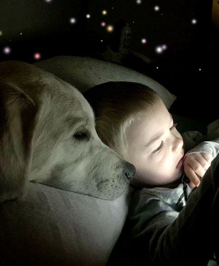 Puppies & PricingPuppy Blog — CaveInn Labrador Retrievers