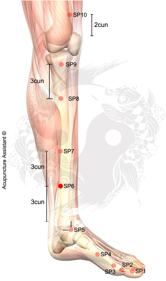 SPLEEN 6: SWELLING (WATER)  Point Localization: 3 cun directly above the tip of the medial malleoulus on the posterior border of the tibia. TCM Actions: Strengthens the Spleen. Resolve dampness. Stimulates the function of the liver. Smooths the flow of Liver Qi. Tonifies Kidney. Nourishes the Blood (Xue) and Yin. Benefits urination. Regulates uterus and menstruation. Moves the Blood …