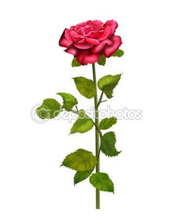Red rose isolated on a white background, illustration, vintage — Stock Photo © sofiartmedia.gmail.com #94254990