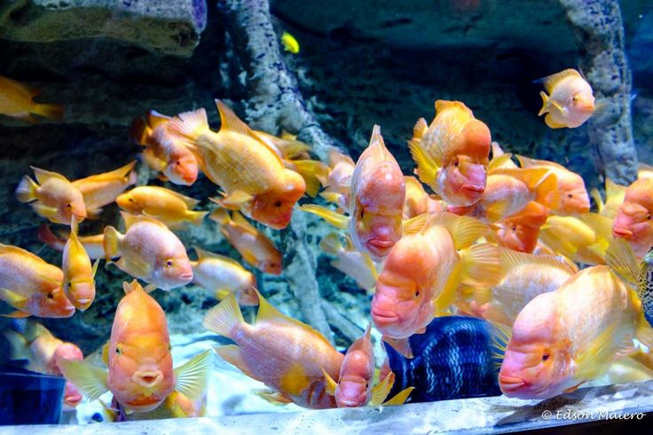 No Underwater Zoo encontramos diversas espécies de peixes de água doce, pinguins, águas-vivas, etc
