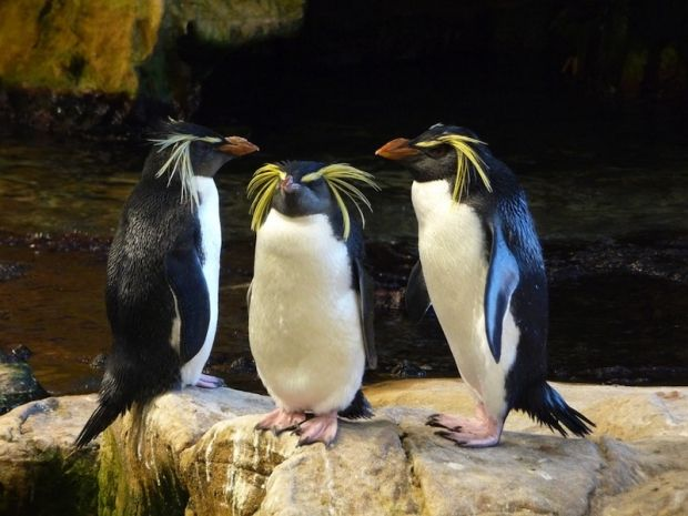 We are looking forward to a penguin encounter at Two Oceans Aquarium.