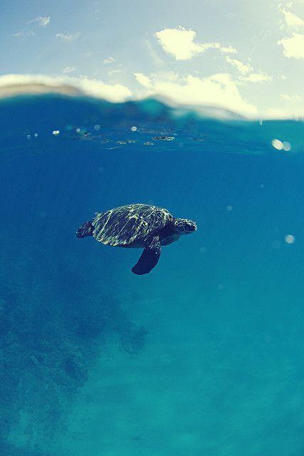 Lone swimmer
