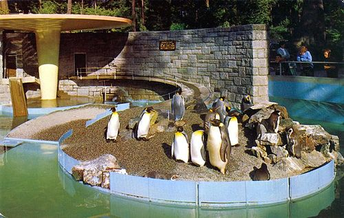 Penguin enclosure - old Stanley Park Zoo