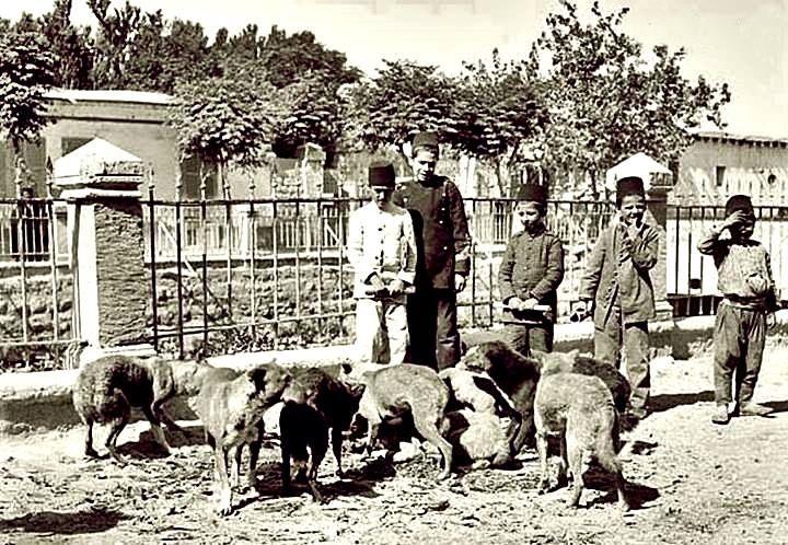 1900ler Köpek bakıcısı - İstanbul