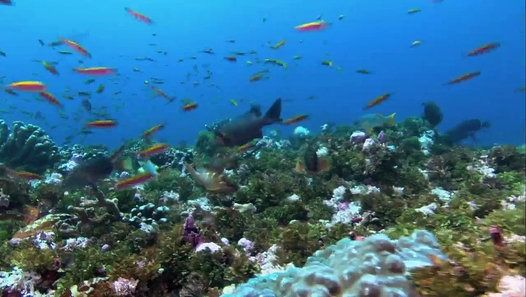 Journey To Shark Eden (2010) National Geographic Journey to Shark Eden: Along the southern Line Islands lay a series of coral reefs teeming with sharks and exotic ocean life. Join leading marine ecologists and National Geographic Emerging Explorer and Fellow, Enric Sala, as they explore this utopia for sharks and discover valuable clues about how to preserve this delicate ecosystem. In an expedition of a lifetime, National Geographic investigates the amazing web of life that exists on one…