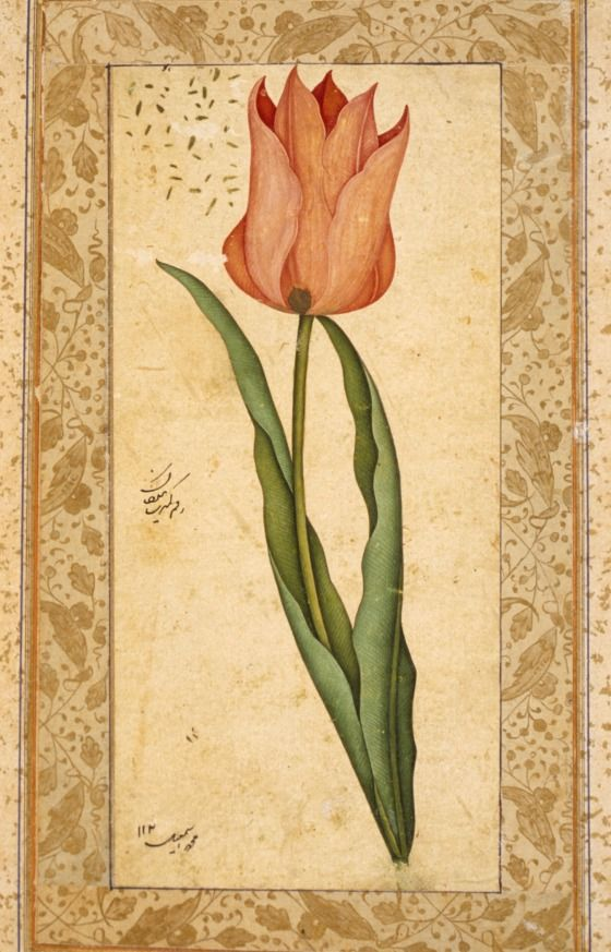 Tulip | LACMA Collections Turkey, 1708-1709/1120 A.H. Manuscripts; folios Ink and opaque watercolor on paper Painting: 6 3/8 x 2 15/16 in. (16.2 x 7.5 cm). Album leaf: 11 1/2 x 7 1/8 in. (29.1 x 18 cm) The Edwin Binney, 3rd, Collection of Turkish Art at the Los Angeles County Museum of Art (M.85.237.47)