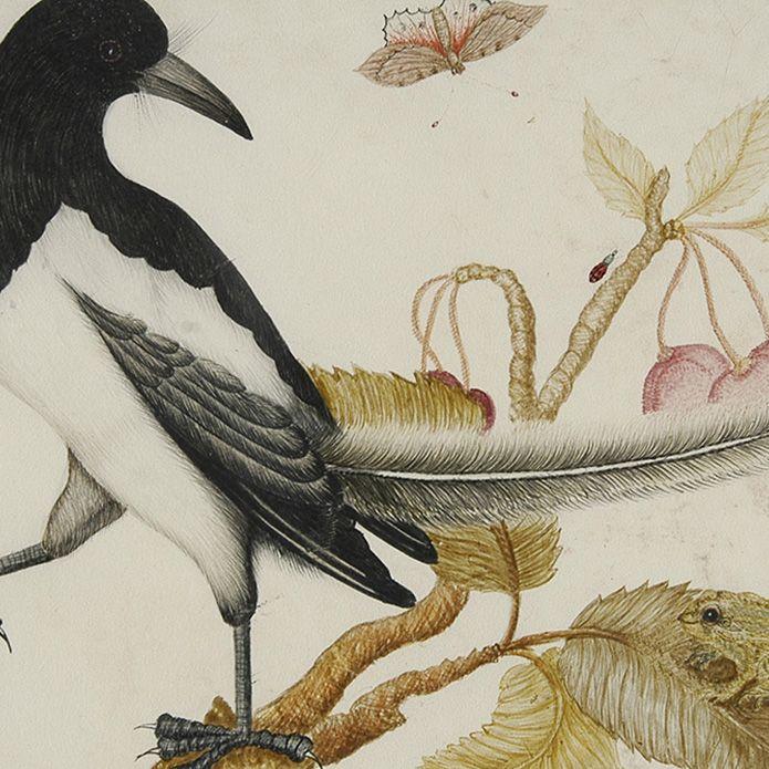 """""""Ptak i żaba na gałązce z owocami wiśni, dookoła motyl, pająk, mucha i biedronki""""  Źródło: Biblioteka Narodowa"""