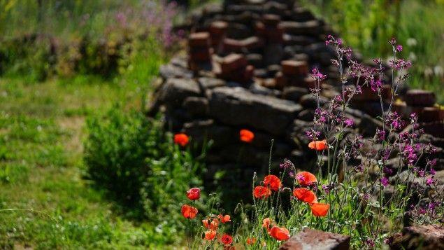 Mohn Mit Roten Bluten Und Eine Weitere Pflanze Mit Pinken Bluten Im Hintergrund Ein Schutthaufen Markus Gastl Schuttgarte Garten Blumen Wiese Garten Anlegen