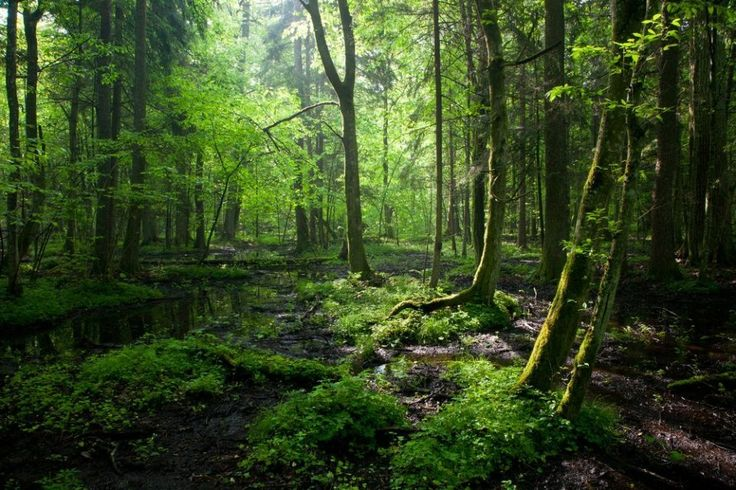 Białowieża Forest is the last patch of primeval woods that once extended across the European lowlands. Today it attracts thousands of visitors, nature lovers, mushroom pickers, anglers and cyclists / Shutterstock