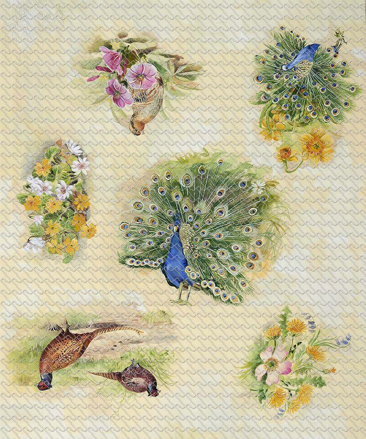 636 - Painting peacock ,pheasant with flower - RU Digital