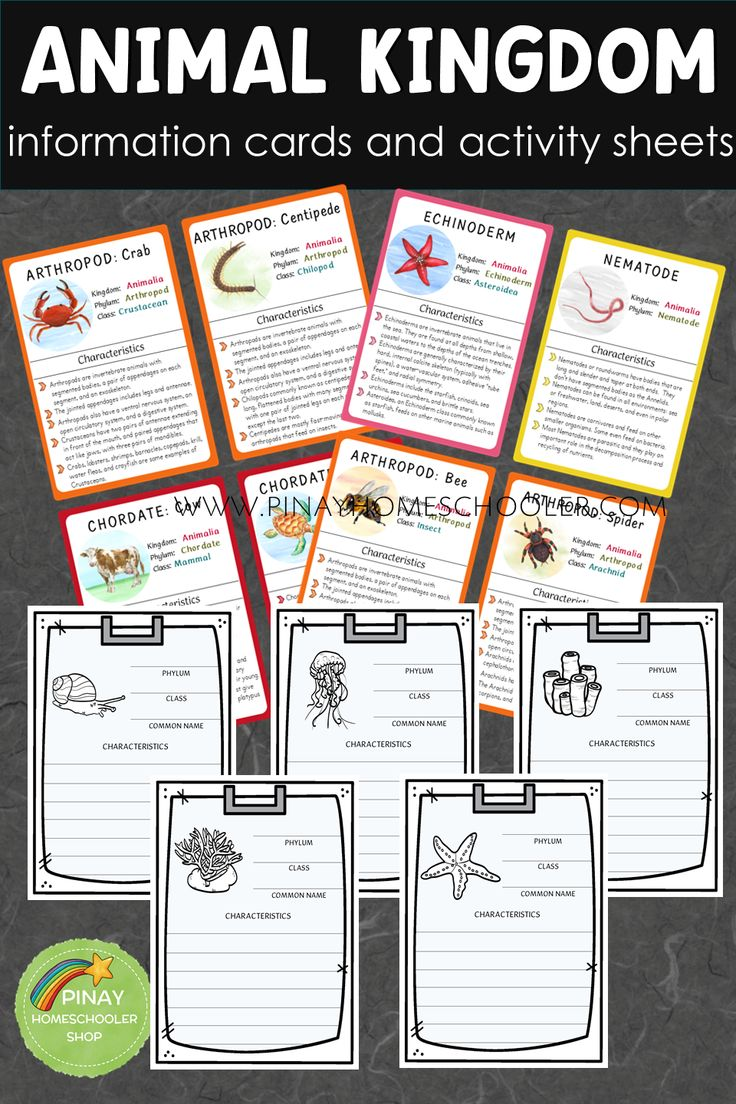 Animal Kingdom information cards with activity sheets #preschool #science #biology #gradeschool #elementary #teacherspayteachers