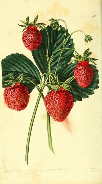 n197_w1150 by BioDivLibrary, via Flickr